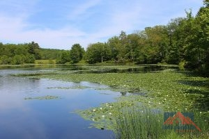Blue Meadow Lake, Mountain Top, PA