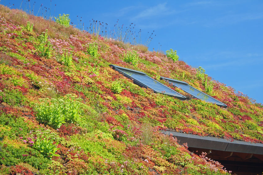 residential green roof with plants and flowers
